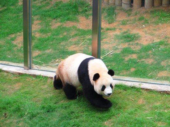 Dalian Forest Zoo : Даляньский лесной зоопарк