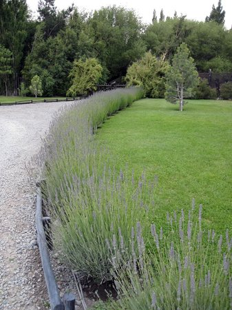 Los Sauces Casa Patagonica: Great landscaping