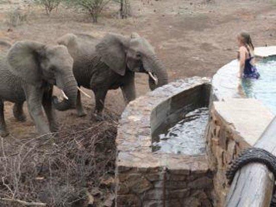 Tuningi Safari Lodge : Swimming with elephants...
