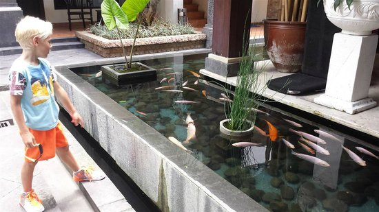 BEST WESTERN Resort Kuta: Fish At Reception