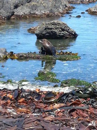 Seal Coast Safari : One of the Seals