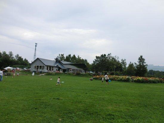 Lake-Hill Farm : 外の芝生