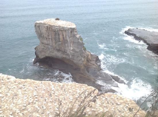Milestone Tours: more gannets