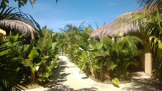 Laguna Gili Beach Resort: Gardens and roof of the villas