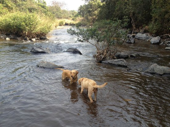 Camp Temgarh: Two of the owner's dogs frolicking in the stream that runs close to the property