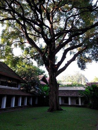 Tamarind Village: 200年羅望子樹