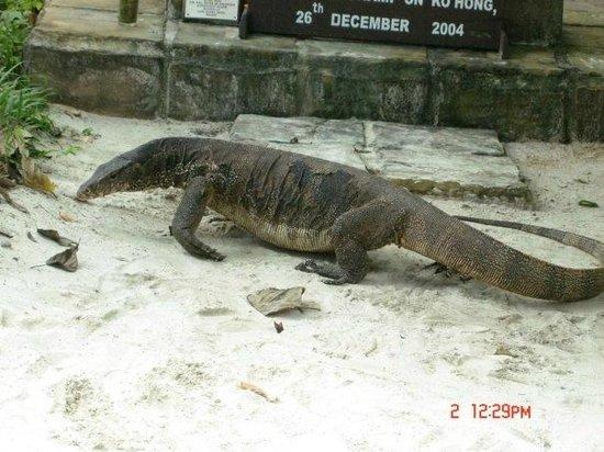 Centara Grand Beach Resort & Villas Krabi: jimmy the lizard