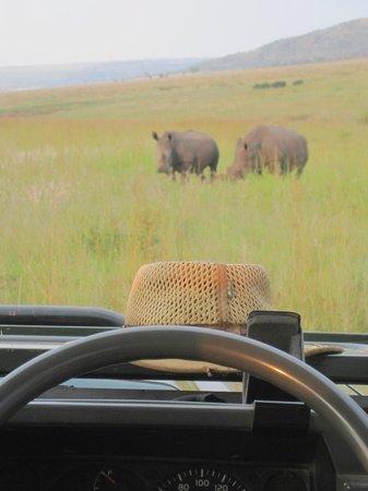 Welgevonden Nature Reserve: Visit from Rhino during Sundowner
