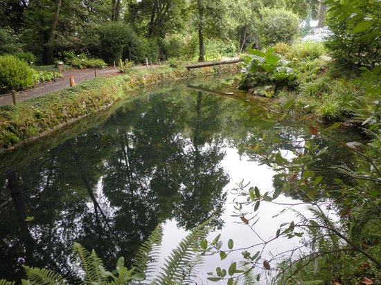 Jardin Botanico Atlantico : riachuelo en el interior
