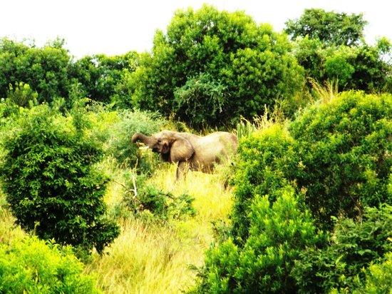 Paraa Safari Lodge: Breakfast With Elephants
