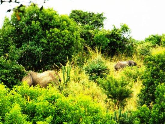 Paraa Safari Lodge: Breakfast Views