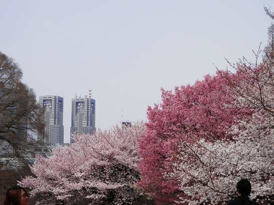 Shinjuku Gyoen National Garden: 御苑