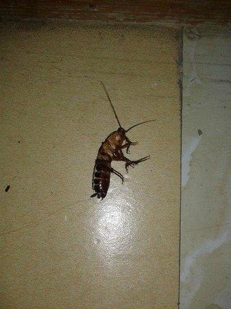 Grand Orzu Hotel: насекомые в номере