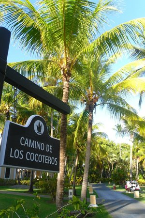 Bavaro Princess All Suites Resort, Spa & Casino : Cocotiers