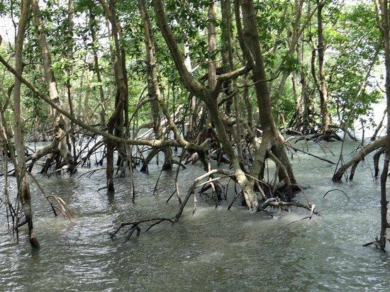 Pulau Ubin: x