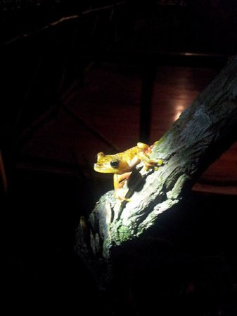 Pachira Lodge: Don't miss out on seeing what coems out at night - take a torch!