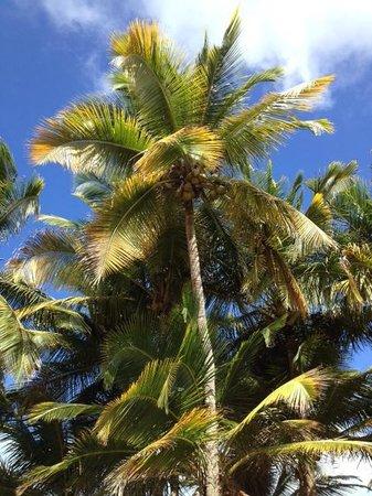 Wyndham Grand Rio Mar Puerto Rico Golf & Beach Resort : On walkway