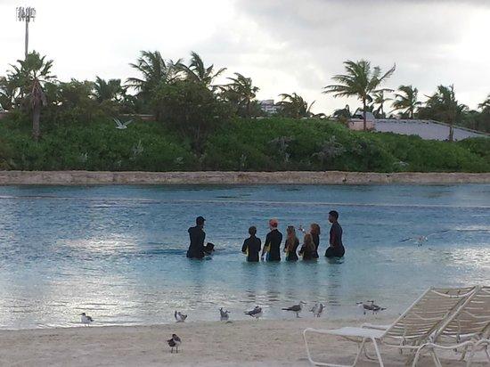 Marine Habitat at Atlantis: Mergulho com Golfinho