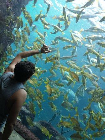 Marine Habitat at Atlantis: Aquário