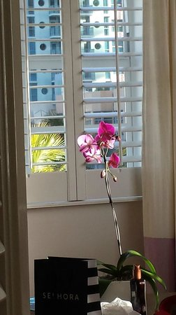 The Betsy - South Beach : King Suite in the morning sun