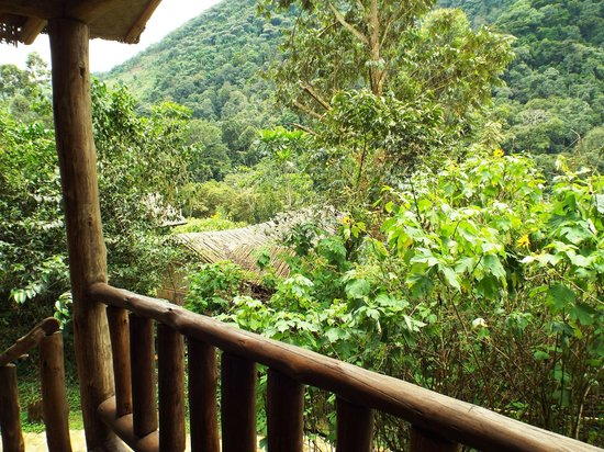 Gorilla Resort Camp: View from our room
