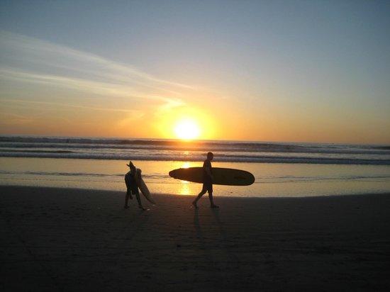 Safari Surf School: Sunset