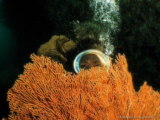 Island Divers: Manuela osserva una gorgonia