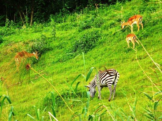 Bunyonyi Safaris Resort : Seen From Boat Trip