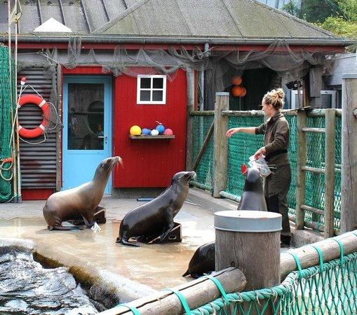 Odense ZOO : Кормление морских львов