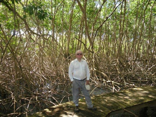 Magdalena Grand Beach & Golf Resort: mangrove swamp in grounds