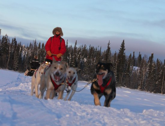 Blachford Lake Lodge: Sleddog