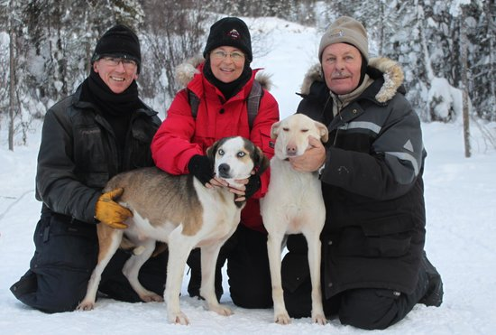 Blachford Lake Lodge: Sleddogs