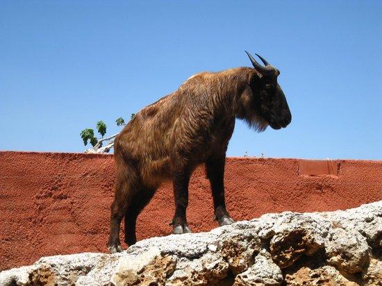 Zoo Natura Parc: животное