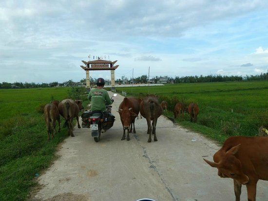 Hoi An Motorbike Adventures: Making way through local life :)
