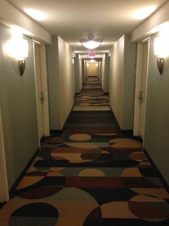 Hilton Garden Inn Albany / SUNY Area: Hallway