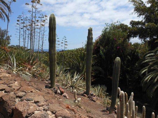 cactus - Picture of Oasis Park Fuerteventura, Fuerteventura - TripAdvisor