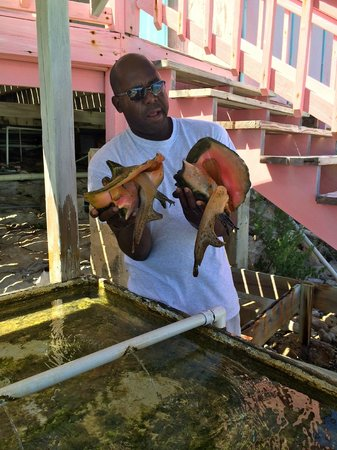 Caicos Conch Farm: Pet conch Sally and Jerry