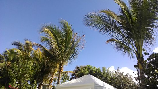 Courtyard Cadillac Miami Beach Oceanfront Nothing But Blue Skies In