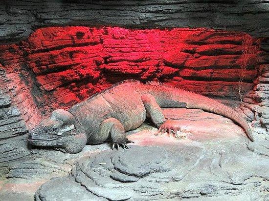 Alligator Adventure Lizard