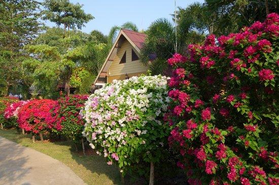 Lanta Castaway Beach Resort: Jardin très bien entretenu