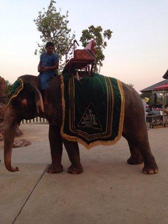 Siam Niramit Phuket : Plenty of these guys to ride...