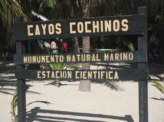 Palma Real Beach Resort & Villas: Île de Cayo Cochinos