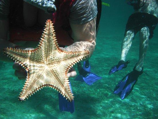 Palma Real Beach Resort & Villas: Plongé en apné à Cayo Cochinos