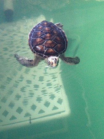 Sea Turtle, Inc.: Sea Turtle