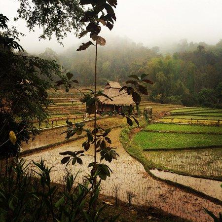 Kamu Lodge : Early morning mist