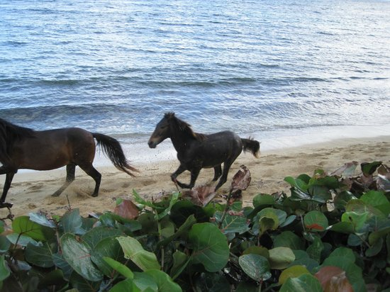 Horsing around on beach in front of 'At the Waves'