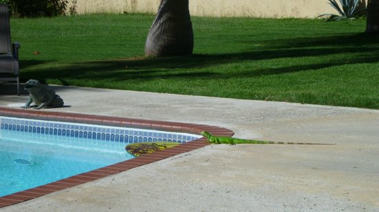 At the Waves: Another wild life sighting, this time poolside