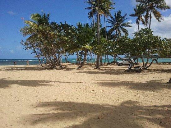 Hotel Playa Caribe : PUNTA POPPY
