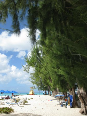 Enterprise (Miami) Beach: Casuarina trees offer shade and birds