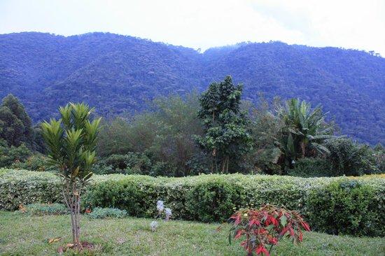 Bwindi Impenetrable National Park : Bwindi Imperntrable National Park